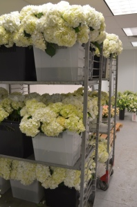 white hydrangea philadelphia high end florists evantine design