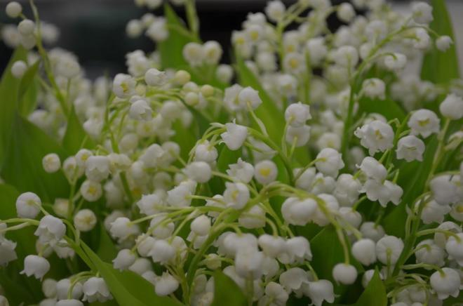 white lily of the valley traditional wedding flowers evantine design