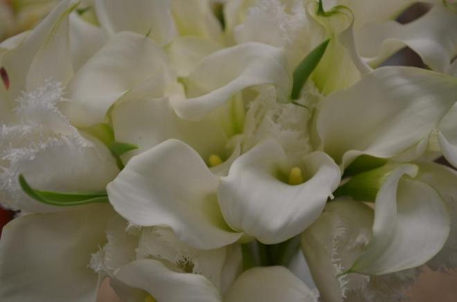 white mini calla lilies white fringe tulips evantine design philadelphia florists