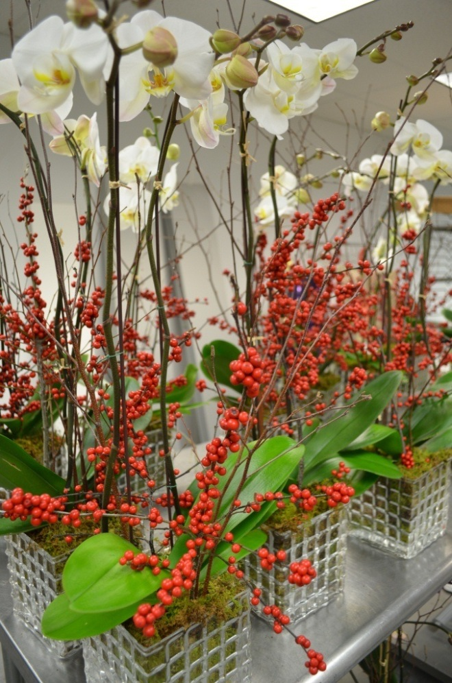 White Orchids for Holiday Gifts Evantine Design Philadelphia
