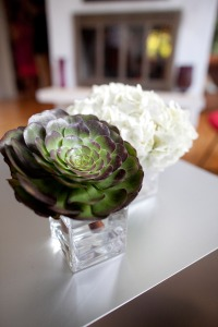 Succulents Hydrangea Modern Minimalist Weddings Philadelphia