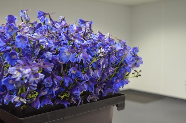 blue delphinium, philadelphia florists