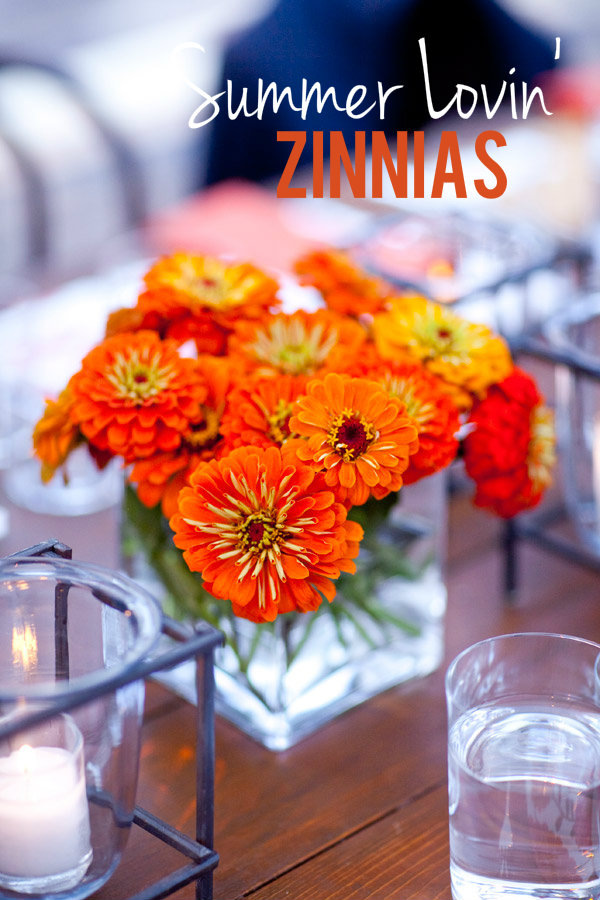 Orange Zinnias Evantine Design Summer Flowers 2