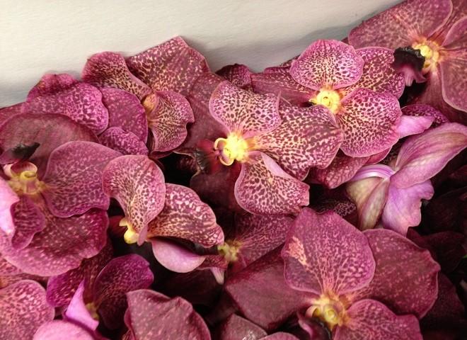 evantine design floral design