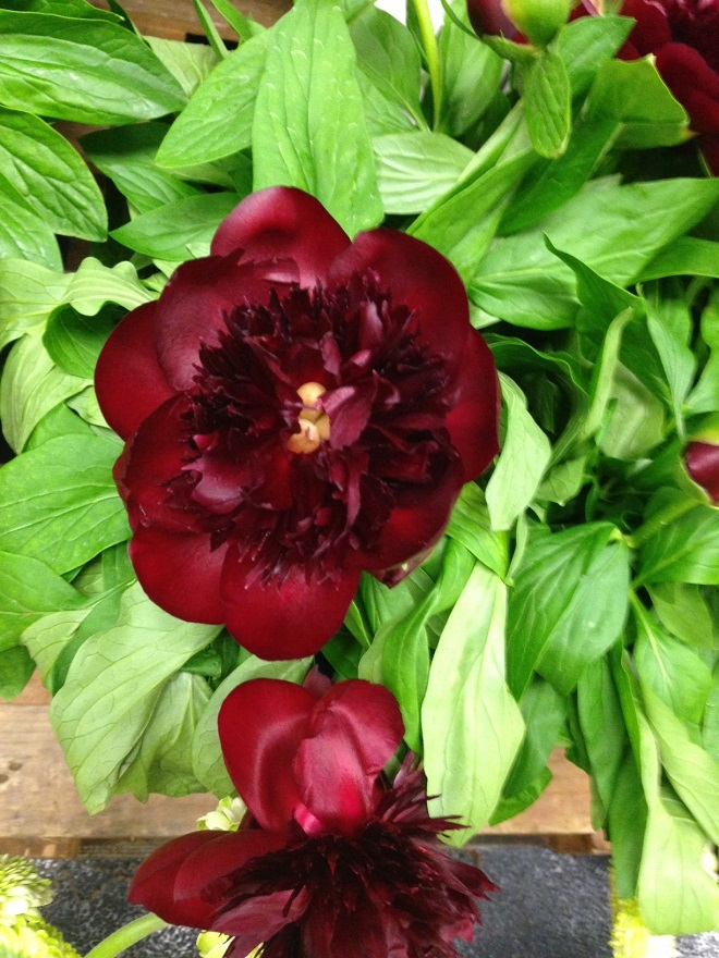 garden flowers for events philadelphia florists evantine design