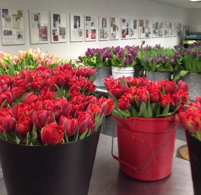 red tulips spring flowers for events