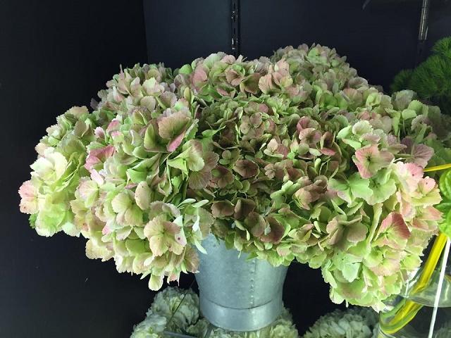hydrangea bouquets valentines day florists philadelphia evantine