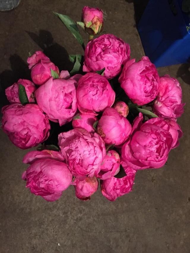 pink peonies valentines day philly florists evantine design