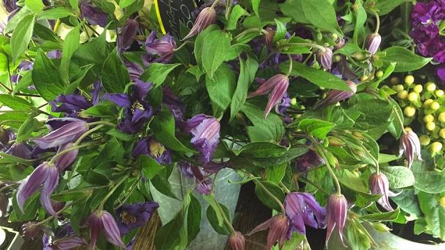 purple flowers clematis floral design evantine