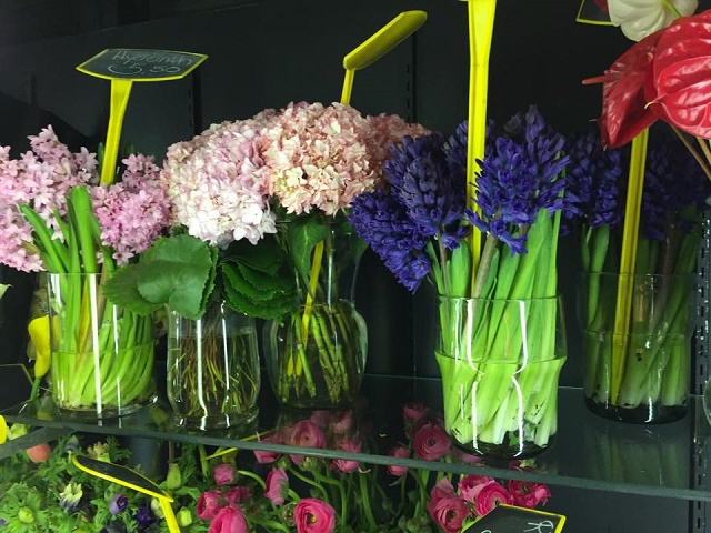 spring bulb flowers hyacinth evantine design