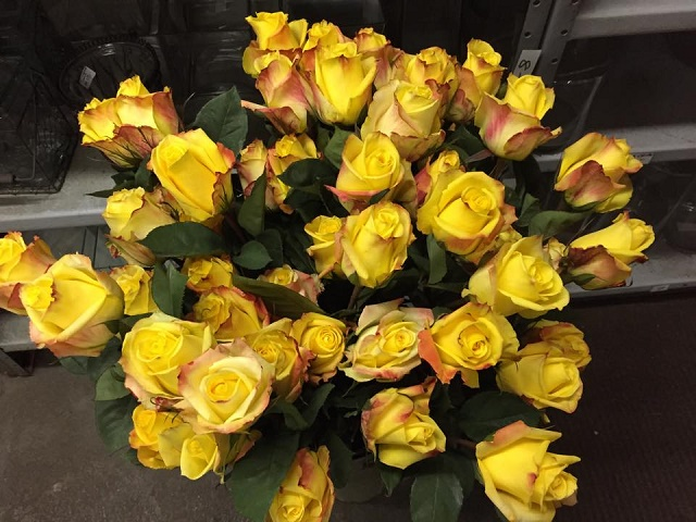 yellow roses valentines day philadelphia florists evantine